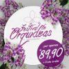 Giuliana Flores - Festival de Orquídeas